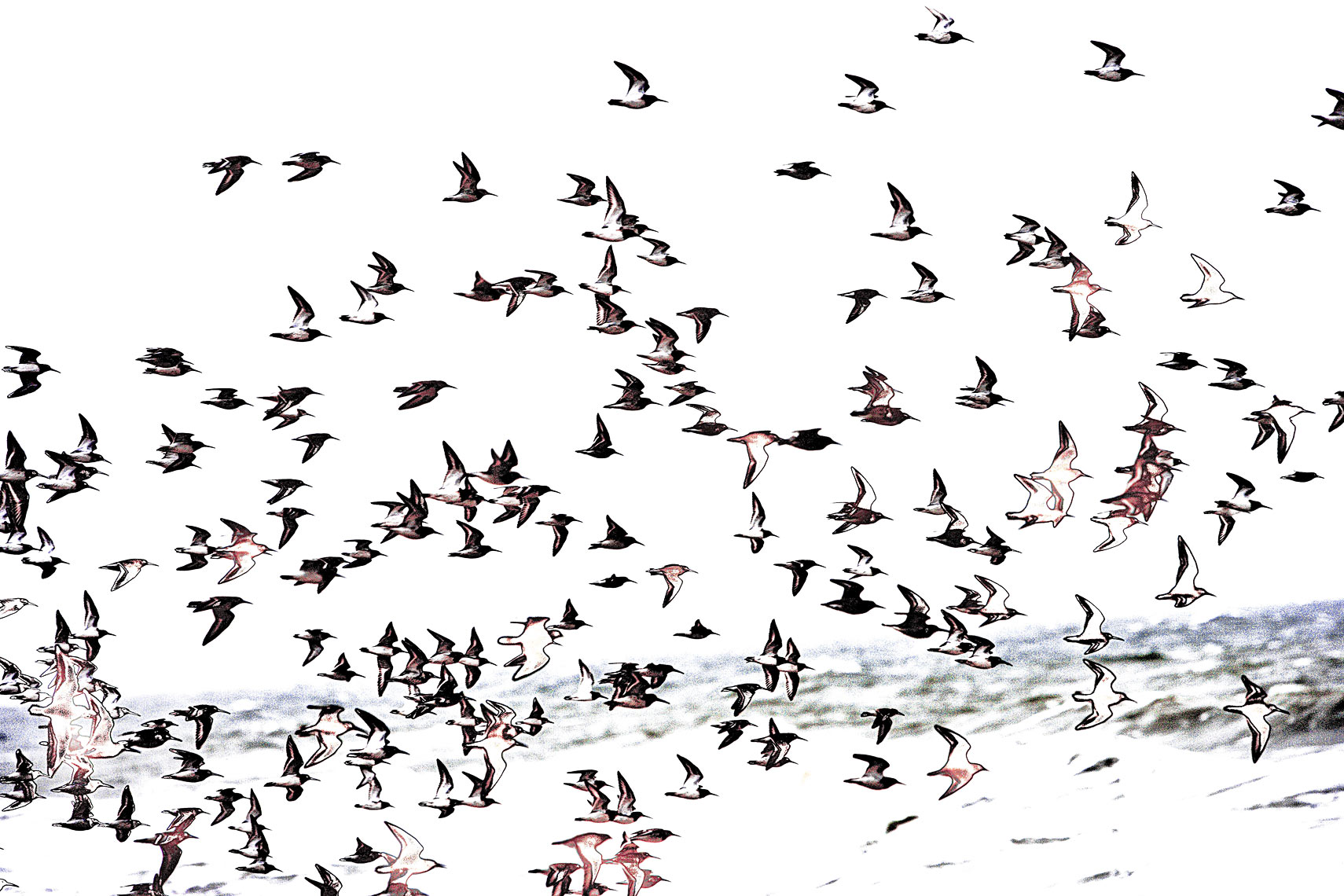 flock of birds during storm  Bald Head Island