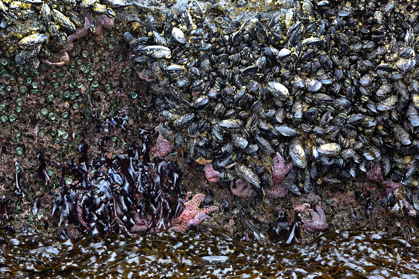 Oregon coastal tidal bed